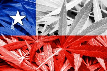 chilean: Chile Flag on cannabis background. Drug policy. Legalization of marijuana