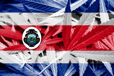 bandera de costa rica: Bandera de Costa Rica en el fondo de cannabis. La política de drogas. La legalización de la marihuana