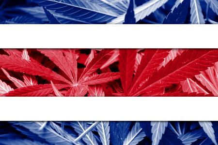 thc: Costa Rica Flag on cannabis background. Drug policy. Legalization of marijuana