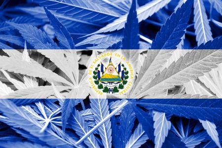 bandera de el salvador: Bandera de El Salvador en el fondo de cannabis. La pol�tica de drogas. La legalizaci�n de la marihuana