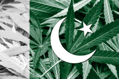 grass close up: Pakistan Flag on cannabis background. Drug policy. Legalization of marijuana