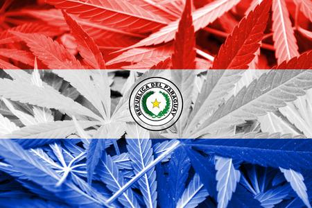 bandera de paraguay: Bandera de Paraguay en el fondo de cannabis. La pol�tica de drogas. La legalizaci�n de la marihuana
