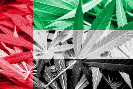 drug dealer: United Arab Emirates Flag on cannabis background. Drug policy. Legalization of marijuana