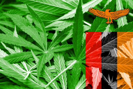 smuggling: Zambia Flag on cannabis background. Drug policy. Legalization of marijuana
