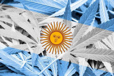 argentina flag: Argentina Flag on cannabis background. Drug policy. Legalization of marijuana