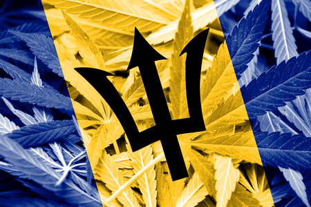 education policy: Barbados Flag on cannabis background. Drug policy. Legalization of marijuana Stock Photo