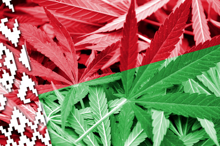 education policy: Belarus Flag on cannabis background. Drug policy. Legalization of marijuana Stock Photo