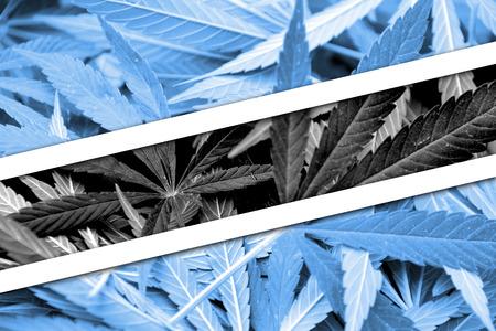drug dealer: Botswana Flag on cannabis background. Drug policy. Legalization of marijuana