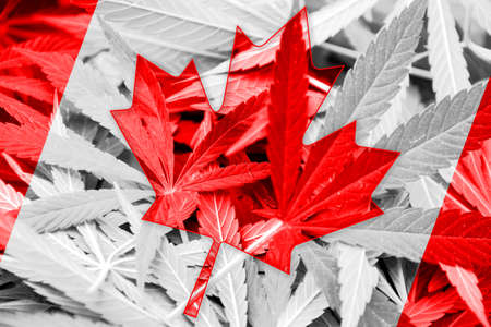 hoja marihuana: La bandera de Canad� en el fondo de cannabis. La pol�tica de drogas. La legalizaci�n de la marihuana Foto de archivo