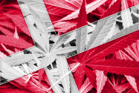 smuggling: Denmark Flag on cannabis background. Drug policy. Legalization of marijuana