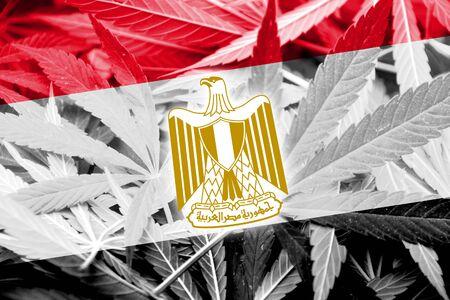bandera de egipto: Bandera de Egipto en el fondo de cannabis. La política de drogas. La legalización de la marihuana Foto de archivo