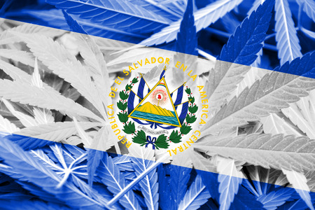 El Salvador Flag on cannabis background. Drug policy. Legalization of marijuana