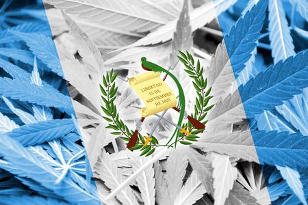 bandera de guatemala: Bandera de Guatemala en el fondo de cannabis. La pol�tica de drogas. La legalizaci�n de la marihuana