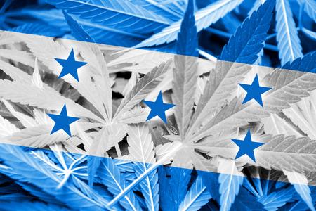 bandera de honduras: Bandera de Honduras en el fondo de cannabis. La pol�tica de drogas. La legalizaci�n de la marihuana