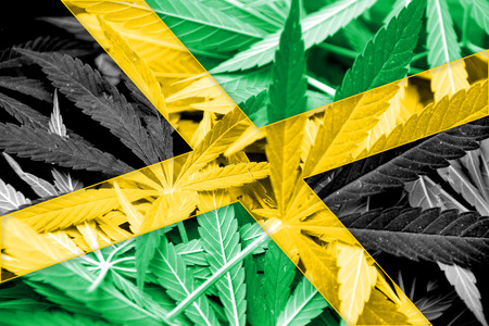 ganja: Jamaica Flag on cannabis background. Drug policy. Legalization of marijuana