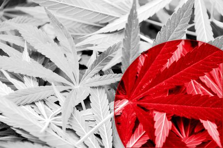 drug dealer: Japan Flag on cannabis background. Drug policy. Legalization of marijuana Stock Photo