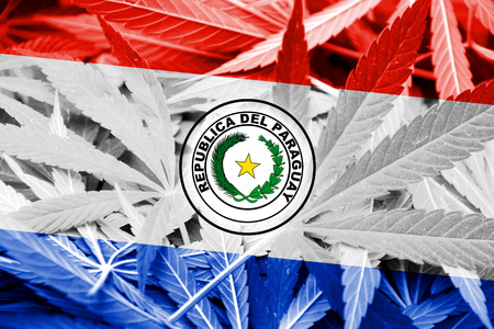 smuggling: Paraguay Flag on cannabis background. Drug policy. Legalization of marijuana