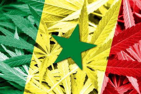 drug dealer: Senegal Flag on cannabis background. Drug policy. Legalization of marijuana