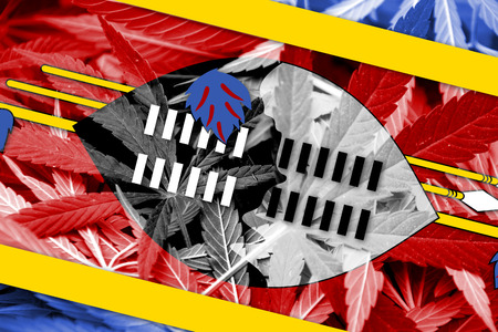grass close up: Swaziland Flag on cannabis background. Drug policy. Legalization of marijuana