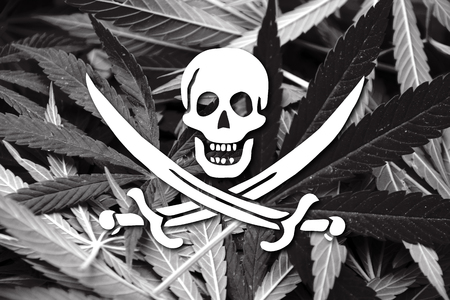 smuggling: Calico Jack Pirate Flag, on cannabis background Stock Photo