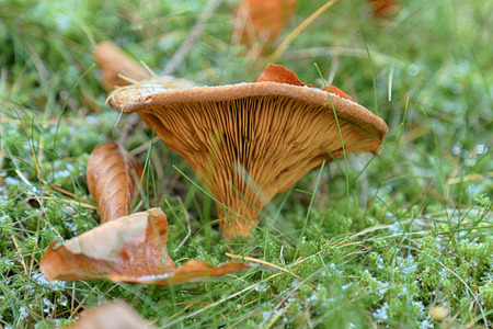 Mushroom in the forest. Autumn background Stock Photo