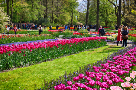 KEUKENHOF GARDEN, LISSE, NETHERLANDS - APR 29, 2017 : Tourists enjoy the flowers at the spring flower garden. It is one of the worlds largest flower gardens. Over 7 million flower bulbs and one million visitors every year. Keukenhof Garden, Lisse, Netherl Editorial
