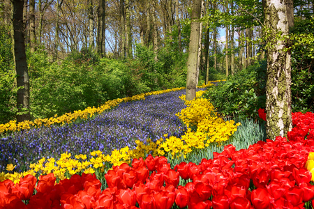 KEUKENHOF GARDEN, LISSE, NETHERLANDS - APR 29, 2017 : It is one of the worlds largest flower gardens. Over 7 million flower bulbs and one million visitors every year. Editorial