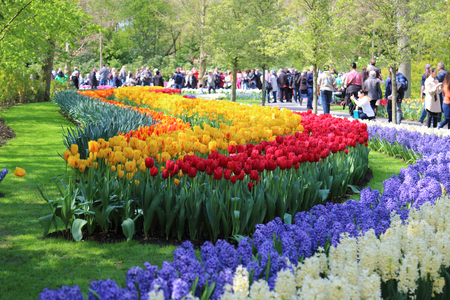 largest tree: KEUKENHOF GARDEN, LISSE, NETHERLANDS - APR 29, 2017 : Tourists enjoy the flowers at the spring flower garden. It is one of the worlds largest flower gardens. Over 7 million flower bulbs and one million visitors every year. Keukenhof Garden, Lisse, Netherl Editorial