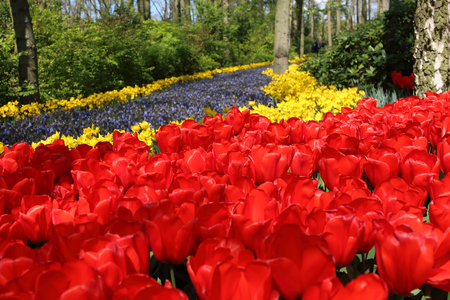 bulb fields: KEUKENHOF GARDEN, LISSE, NETHERLANDS - APR 29, 2017 : It is one of the worlds largest flower gardens. Over 7 million flower bulbs and one million visitors every year. Editorial