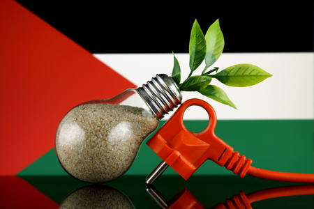 plug plant growing inside the light bulb and palestine flag green