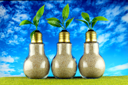 Green eco light bulbs on the grass and blue sky background, plants growing inside the light bulbs. Renewable energy concept. Stock Photo
