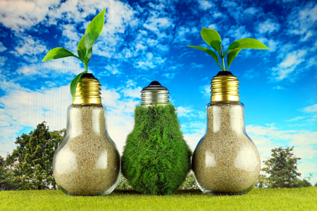 Green eco light bulb on the grass, plants growing inside the light bulbs and blue sky background. Renewable energy concept. Stock Photo