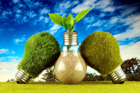 Green eco light bulbs with grass, plant growing inside the light bulb and blue sky background. Renewable energy concept. Stock Photo