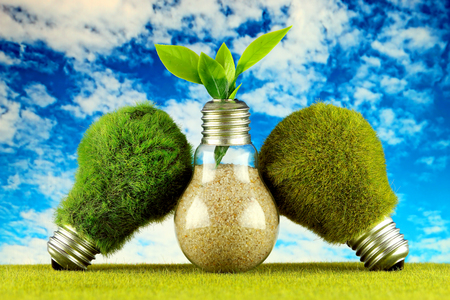 Green eco light bulbs with grass, plant growing inside the light bulb and blue sky background. Renewable energy concept. Banque d'images