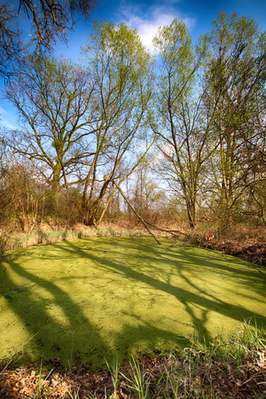 Aquifer near Wroclaw, Poland. Lush green swamp. The sun is peeking through the thick foliage to reveal a gorgeous natural landscape.