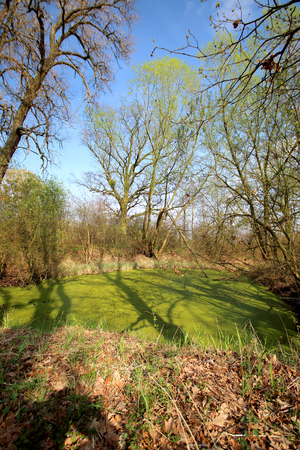 Aquifer near Wroclaw, Poland. Lush green swamp. The sun is peeking through the thick foliage to reveal a gorgeous natural landscape. Imagens