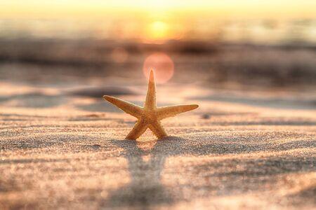 Starfish and beautiful sunset on the beach.