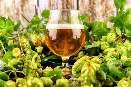 Glass of craft beer and fresh hop cones on a wooden background.