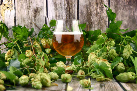 Glass of craft beer and fresh hop cones on a wooden background. Banque d'images