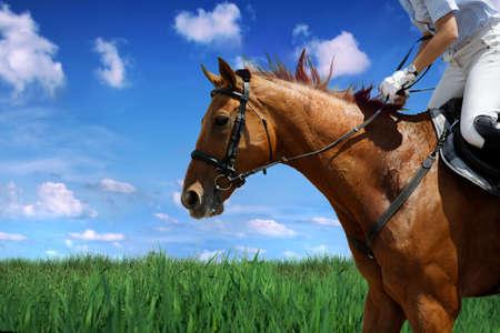 horse saddle: Horse theme: jockeys, horse races, speed.  Stock Photo