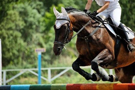 Horse theme: jockeys, horse races, speed. photo