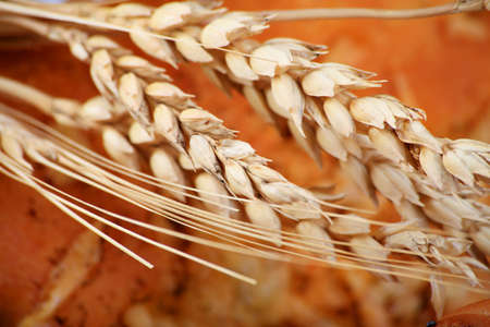 foodstuffs: Ears of wheat over bakery foodstuffs. Shot in a studio. Stock Photo