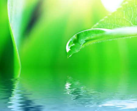 Foglie verdi fresche con goccia d'acqua.