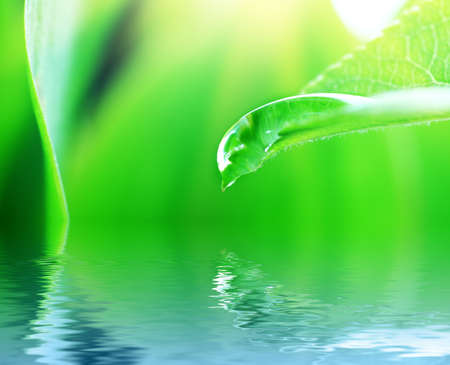 Fresh green leaves with drop of water. Stock Photo - 7389620