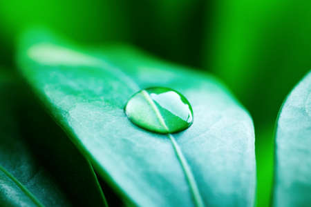 Fresh green leaves with drops of water. Stock Photo - 7803150
