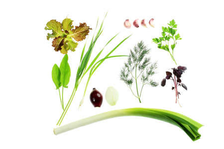 Collection of green herbs isolated over white background. Stock Photo - 7992530