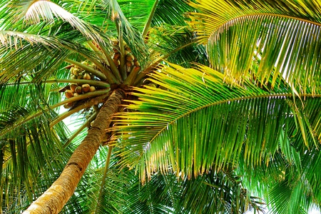 Tropical Beach with coconut palm trees. photo
