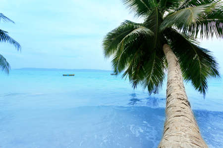 coconut trees: Picturesque landscape of tranquil island beach with palms. Stock Photo
