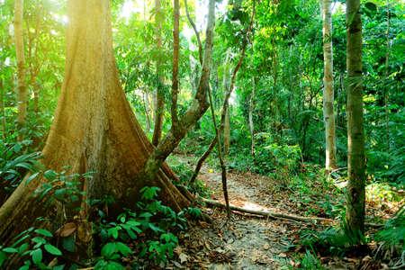 熱帯林やヤシの木の転輪