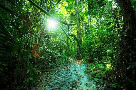 selva: Los bosques tropicales, palmeras y trank.